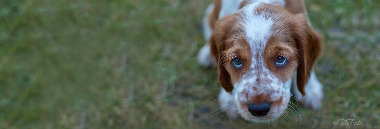 Skinnarklubben - kliande hund
